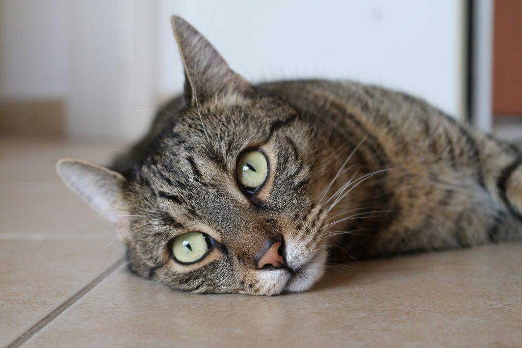Via het dierdonorcodicil kan je je huisdier doneren aan de wetenschap.