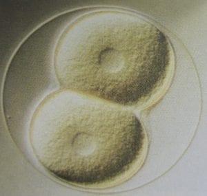 ontwikkeling celdeling