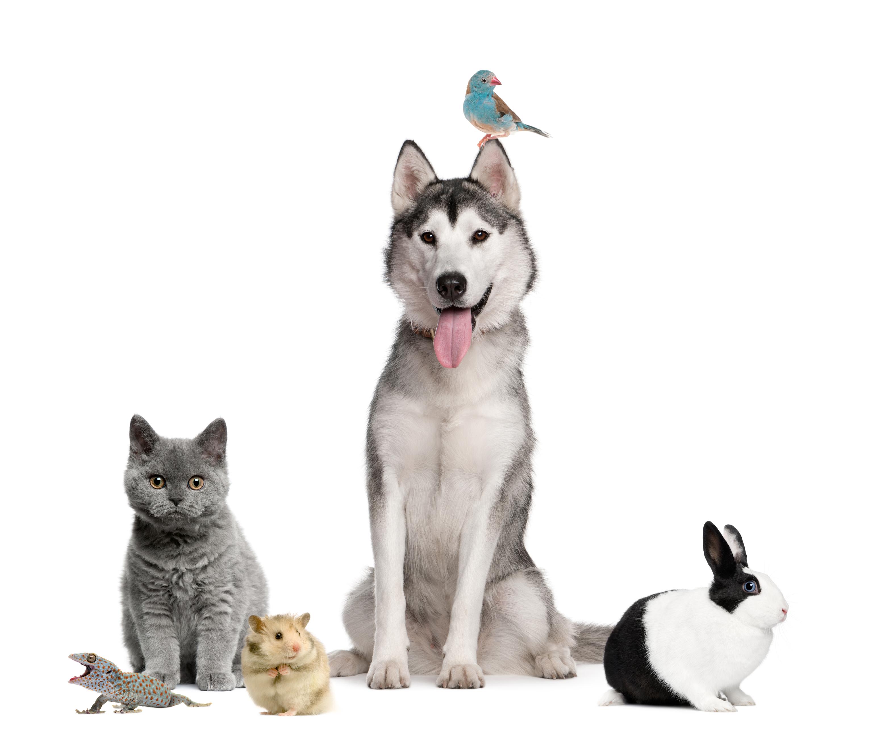 Proefdiervrij, dieren, hond, kat, konijn, vogel
