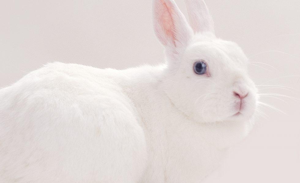 konijn01vrij