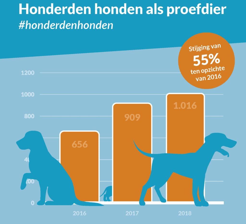 honderden honden
