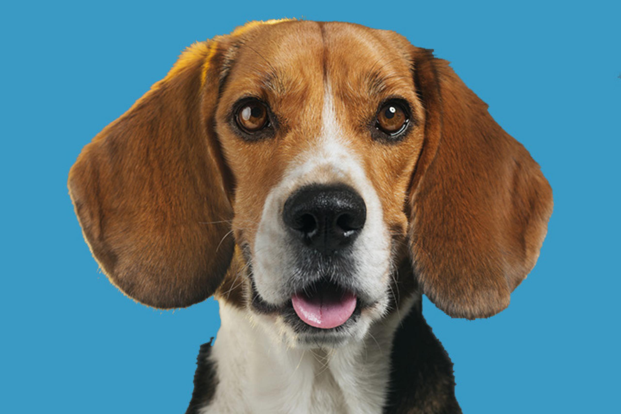 Honderden honden als proefdier